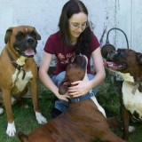 Boxers are Best Dogs for Kids